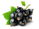 Modified Packaging - Black Currant
