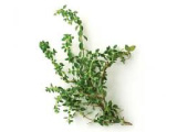 Modified Packaging - Thyme